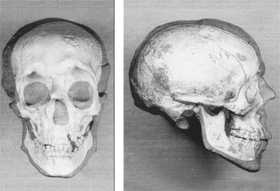 Гипсовая копия черепа ивана грозного